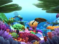 Marine Life 3D Screensaver screenshot